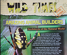 Wild Times 5 185