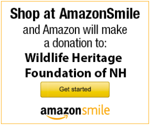 Donate using Amazon Smile