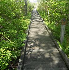 boardwalk1 223 x 225